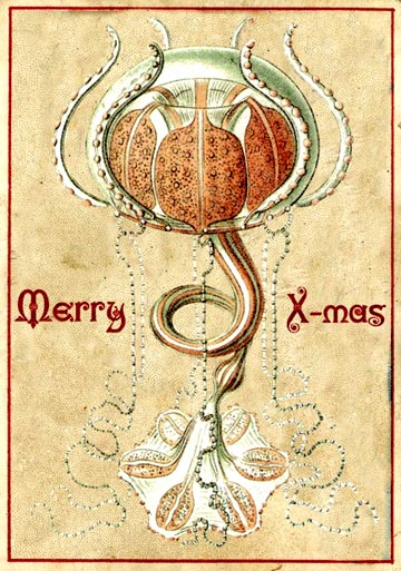 ernst henckel jelly fish christmas card 1900